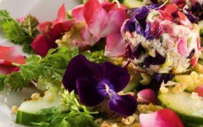 Rezept der Woche: Gurken-Kräutersalat mit Ziegenkäse-Blütenkugeln