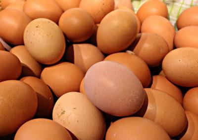 Bodendörfer Eier