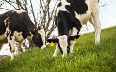 """Hofgut Eichigt+++Bio-Tierhaltung neu gedacht +++ """"Lasst es uns richtig machen"""" +++"""